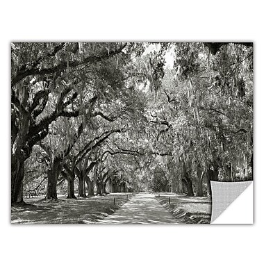 ArtWall ArtApeelz 'Live Oak Avenue' by Steve Ainsworth Photographic Print Removable Wall Decal