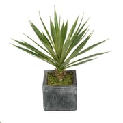 House of Silk Flowers Artificial Baby Yucca Plant in Ceramic Cube