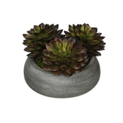 House of Silk Flowers Artificial Pointed Echeveria Plant in Ceramic Bowl