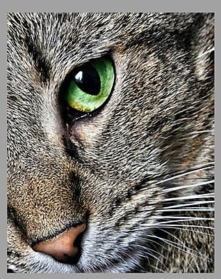 Wallhogs Batie's ''Max Close Up'' Glossy Poster; 38.5'' H x 48'' W