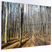DesignArt 'Shade from Sun in Autumn Forest' Photographic Print on Metal; 12'' H x 28'' W x 1'' D