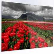 DesignArt 'Rows of Bright Ruby Red Tulips' Photographic Print on Metal; 12'' H x 28'' W x 1'' D