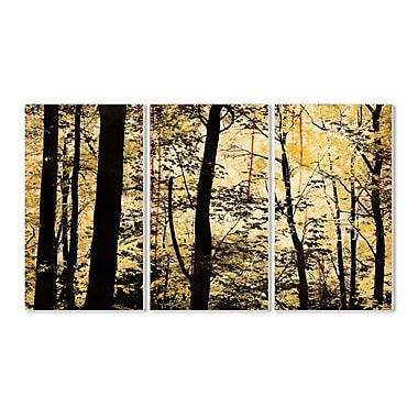 Stupell Industries Golden Birches in the Forest Landscape 3 Piece Photographic Print Wall Plaque Set