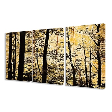 Stupell Industries Golden Birches in the Forest Landscape 3 Piece Photographic Print on Canvas Set