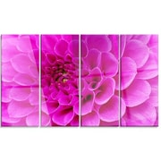 DesignArt 'Purple Flower w/ Close-Up Petals' 4 Piece Photographic Print on Canvas Set
