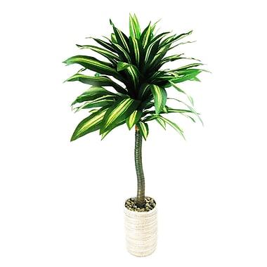 LCGFlorals Dracaena Plant in Basket