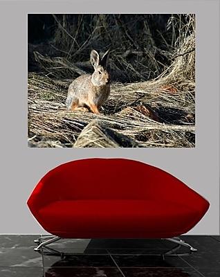 Wallhogs Batie's Cottontail Glossy Poster; 48'' H x 60'' W