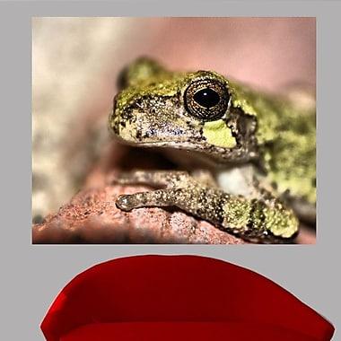 Wallhogs Batie's Frog Glossy Poster; 19'' H x 24'' W