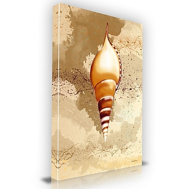 Maxwell Dickson Seashell Graphic Art on Wrapped Canvas; 36'' H x 24'' W