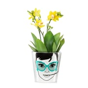 Donkey Products Ceramic Pot Planter; 5.75'' H x 5.8'' W  x 5.8'' D