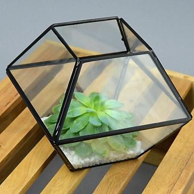 Vasesource Glass Terrarium Planter; 8'' H x 8'' W x 8'' D