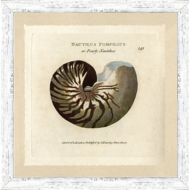Hand Colored Art Shell Study Framed Giclee Print; 22'' H x 22'' W