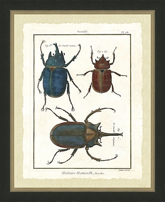 Hand Colored Art Beetle Framed Giclee Print; 22'' H x 18'' W
