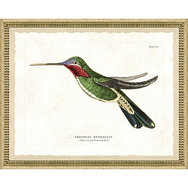 Hand Colored Art Hummingbird Framed Giclee Print; 22'' H x 26'' W