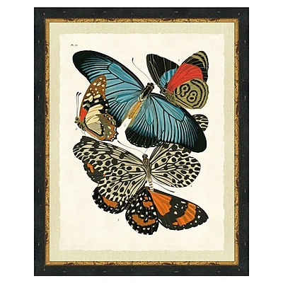 Smith & Co. Butterfly Collage Framed Graphic Art; 26'' H x 22'' W