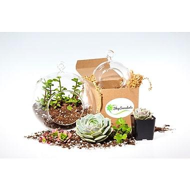 ShopSucculents 7 Piece Modern Succulent Terraium Globe Set