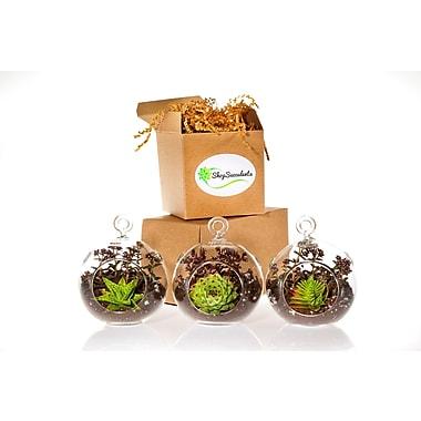 ShopSucculents 6 Piece Miniature Succulent Garden Trio Globe Set