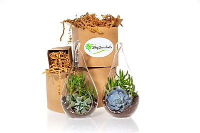 ShopSucculents Succulent Terrarium 5 Piece Decorative Hanging Teardrop Succulent Garden Duo Set