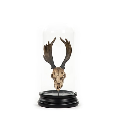 Zentique Inc. Deer Skull w/ Bel Glass Sculpture