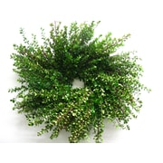 From the Garden 18'' Boxwood Wreath