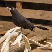 Ragon House Collection Black Crow Decor Figurine