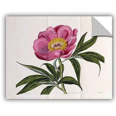 ArtWall William Curtis Illustration Number 2264 Wall Decal; 14'' H x 18'' W x 0.1'' D