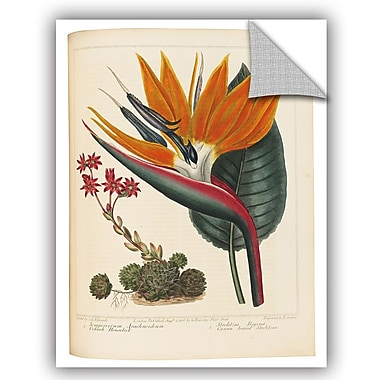 ArtWall Sydenham Teast Edwards Cobweb Houseleek and Canna Leaved Strelitzia Wall Decal