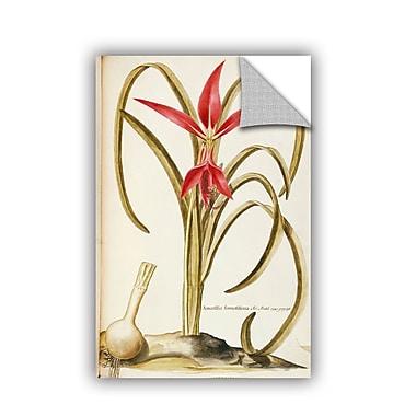 ArtWall Francesco Peyrolery Jacobean Or Aztec Lily, Sprekelia Formosissima Wall Decal