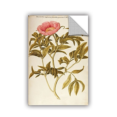 ArtWall Francesco Peyrolery Common Peony, Paeonia Officinalis Wall Decal; 24'' H x 16'' W x 0.1'' D