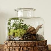 Creative Co-Op Botanist Hand Blown Glass Bottle Shaped Vase; 9'' H x 11'' W x 11'' D