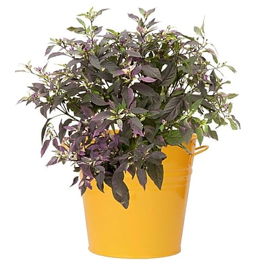 Houston International Galvanized Steel Pot Planter; Saffron