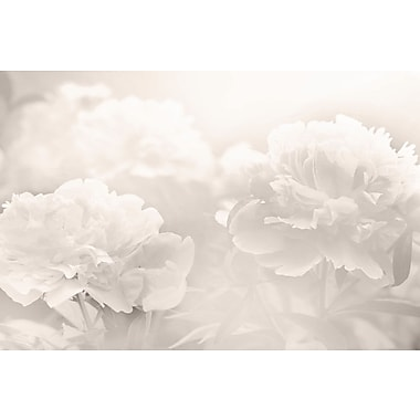 Marmont Hill 'Peony' Photographic Print on Wrapped Canvas; 12'' H x 18'' W x 1.5'' D