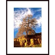 Printfinders 'Valley Oak and Clouds' by John Nakata Framed Photographic Print