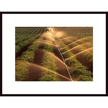 Printfinders 'Artichoke's in the Mist' by John Nakata Framed Photographic Print