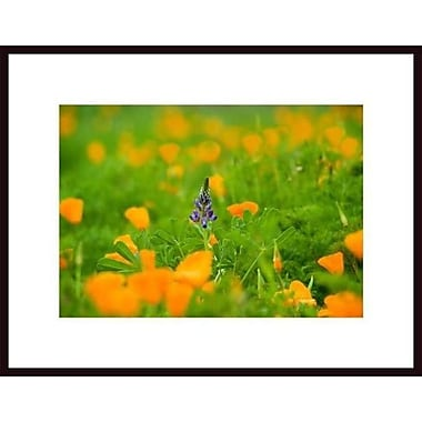 Printfinders 'Be Different' by John Nakata Framed Photographic Print