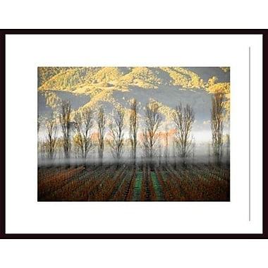Printfinders 'Vineyard' by John Nakata Framed Photographic Print