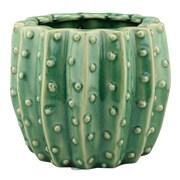 CKK Home D cor, LP Stonebriar Ceramic Cactus Nursery Pot