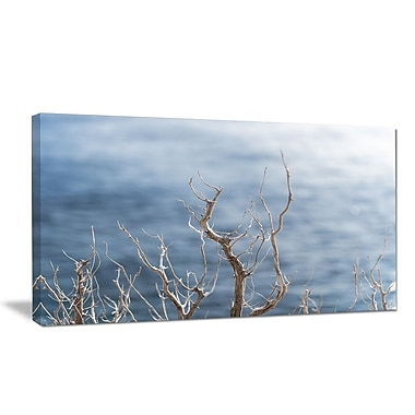 DesignArt 'Leafless Winter Branches' Photographic Print on Wrapped Canvas; 20'' H x 40'' W x 1'' D
