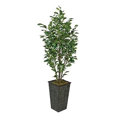 House of Silk Flowers Ficus Tree in Planter; Variegated