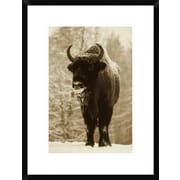 Global Gallery European Bison or Wisent in Snow, Europe by Rinie Van Meurs Framed Photographic Print
