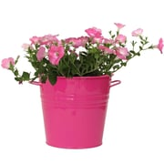 Houston International Galvanized Steel Pot Planter; Hot Pink