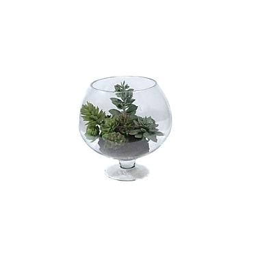 Gold Eagle USA Succulent Plant in Decorative Vase