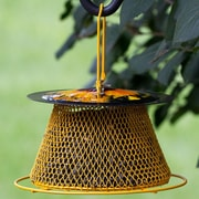 Perky Pet Sunflower Single Tier Hopper Bird Feeder