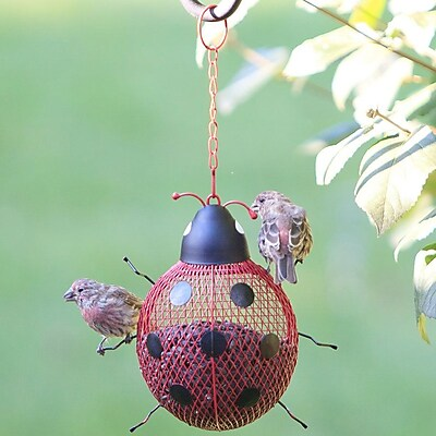 Perky Pet Ladybug Mesh Wild Bird Feeder (WYF078280165751) photo