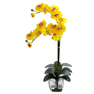 World Menagerie Double Phalaenopsis Orchid in Vase; Yellow