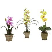 August Grove Potted Orchid Mix (Set of 3); Lavender/Gold/Yellow