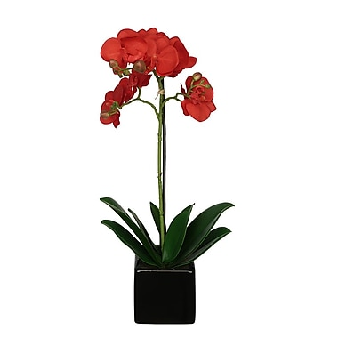 House of Silk Flowers Artificial Baby Orchid Flowers in Pot; Red
