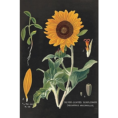 August Grove Sunflower Chart Graphic Art on Wrapped Canvas; 26'' H x 18'' W x 1.5'' D