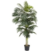 Bay Isle Home Cane Palm Tree in Pot