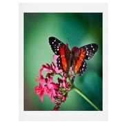 East Urban Home Butterfly Graphic Art; 24'' H x 18'' W x 0.13'' D
